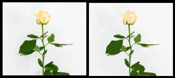 Valokuva ja vektori